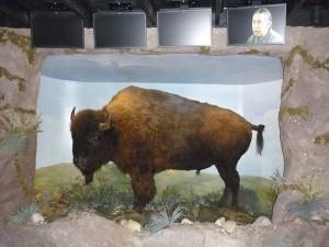 DC bison29p1090517